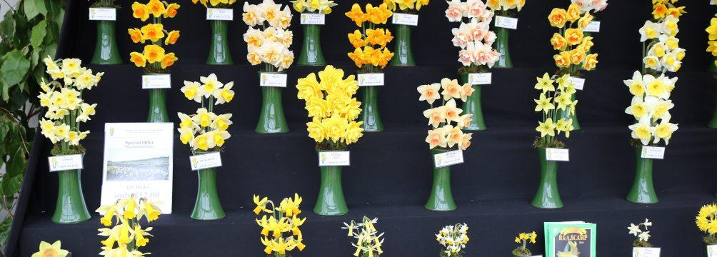 Falmouth Spring Flower Show