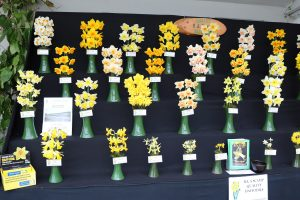 Flower Show 300x200 - What's On in 2021